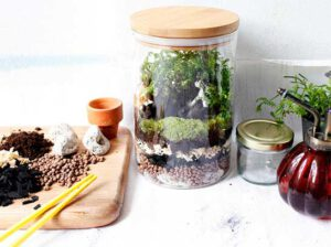 DIY จัดสวนในขวดแก้ว ของแต่งบ้านน่ารักๆ เพิ่มมุมสดชื่นให้บ้าน