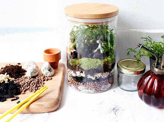 DIY จัดสวนในขวดแก้ว